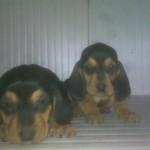 Cuccioli di 30 gg