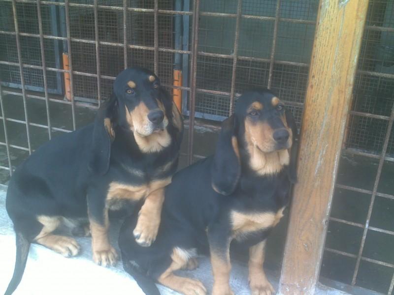 Cuccioli di 4 mesi