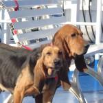 Gazza e Gioiosa sul traghetto per l'Isola d'Elba