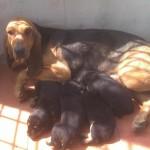 Gioiosa con i suoi cuccioli
