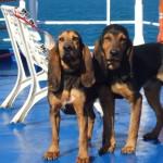 Lucifero e Becki sul traghetto per l'Isola d'Elba