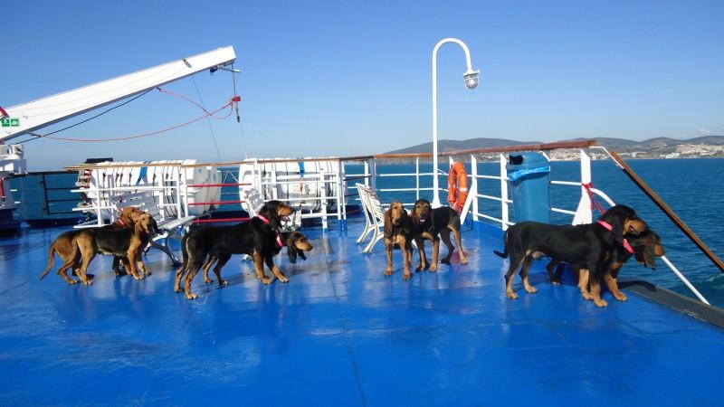 Muta al completo concorrente alla prova su cinghiale, Isola d'Elba 2011