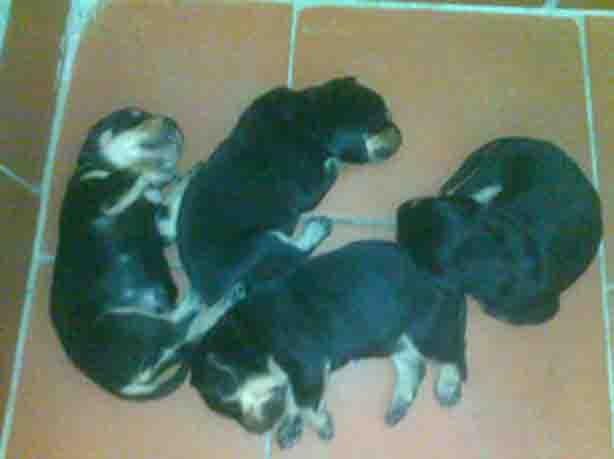 Cuccioli di 7 giorni